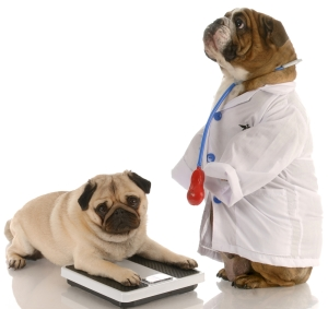 step_veterinario